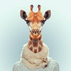"""""""Zoo Portraits"""", un projet du photographe Yago Partal, qui mélange photographie de mode et animaux dans une excellente série de portraits d'animaux habillés"""
