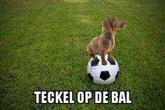 Voetbal dog