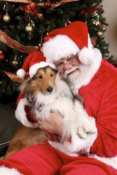 Merry Christmas you filthy animal. 49 Dog photos all dressed up for there Christmas cheer. So many cute puppies in here that will warm your Grinchy heart. Christmas Puppy, Christmas Animals, Christmas Cats, Filthy Animal, Collie Dog, Shetland Sheepdog, Sheltie, Dog Photos, Animal Photography