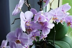 Growing orchids | SA Garden and Home