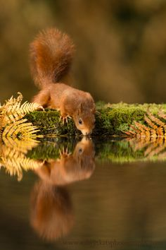 Autumn Delight - by Edwin Kats