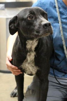 SAFE!!!!!!!!!!! 01/20/15-ODESSA SUPER URGENT - We need donations so we can help save this girl. We need $150 to spay and get her shots. Please donate here to help Mary Donate to help us save more. we are 501(c)(3) all donations are tax deductible http://www.youcaring.com/adoption…/saving-odessa-dogs/288296