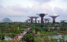 This amazing city is definitely worth a visit due to all the incredible places you can find within it. Here 10 amazing places to visit in Singapore. Singapore Business, Singapore Travel, Singapore Tour, Singapore Attractions, Singapore Garden, Book Cheap Flight Tickets, Garden Park, Gardens By The Bay, Nature Reserve