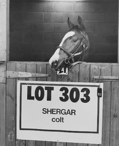 The disappearance of Shergar