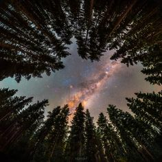 APOD: 2021 July 19 - Framed by Trees: A Window to the Galaxy Galaxy Images, Nasa Images, Image Center, Astronomy Pictures, Nightlights, Milky Way, Science And Nature, Cosmos, Earth