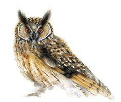 Owl watercolor - Owl Painting - Giclee Print - Home Wall Decor - Bird Watercolor Illustration. Owl Watercolor, Watercolor Paintings, Painting Art, Watercolor Animals, Watercolors, Bird Illustration, Watercolor Illustration, Illustrations, Blue Bird Art