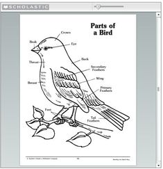 label the parts of a bird bird lessons birds homeschool education