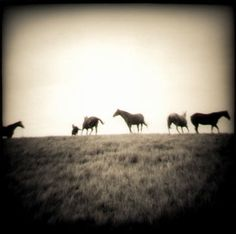 Five Horses ( running ) by eyecaramba, via Flickr