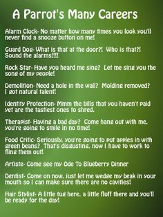 A Parrot's Many Careers.... No dentistry for mines! Lol