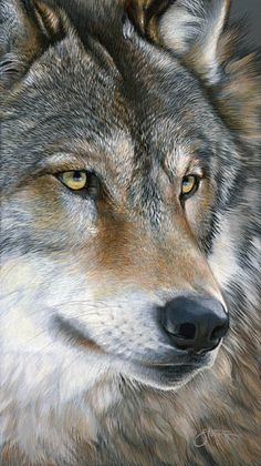 Up Close - wolf - wildlife painting by Scot                  Storm