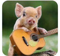 Pig playing guitar :)