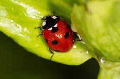 Ladybug by marc daly on 500px