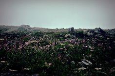 Biaba Góra