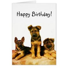 German Shepherd Greeting Post Cards Birthday Christmas Get Well Welcome More
