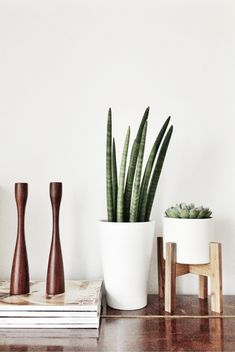 some pretty succulents to add a little life and greenery to the space