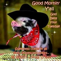 Happy Tuesday from this here Cowpig!