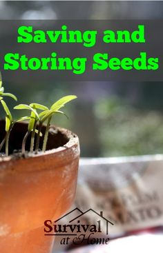 Saving and Storing Seeds (via Survival at Home)
