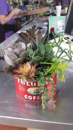 Succulents in a vintage coffee can