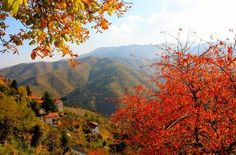 Paesaggio autunnale a Triora.- -ITALIA-Paesaggi autunnali italiani by Francesco-Welcome and enjoy- - #Expo2015 #WonderfulExpo2015 #ExpoMilano2015 #Wonderfooditaly #MadeinItaly #slowfood #FrancescoBruno @frbrun http://www.blogtematico.it frbrun@tiscali.it http://www.francoingbruno.it