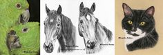 Custom pet portraits are drawn from photographs which capture the soul of your dog, cat, horse or any pet in pastel or charcoal.