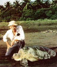 Archie Carr was known for his efforts in conservation, especially for sea turtles. He wrote many books and made many efforts to save the species from near extinction.