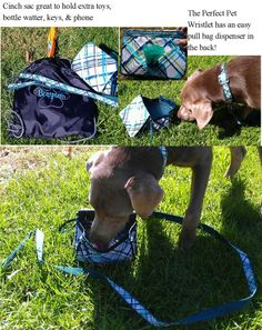 Thirty-One Gifts - Don't forget Fido this Spring!  Large Perfect Pet Collar $15, Perfect Pet Leash $18, Perfect Pet Wristlet $25 all in www.mythirtyone.com/RandeSerbanjak