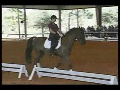 Fantastic video about canter transitions
