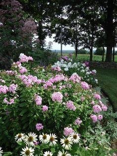 Michael Leva Litchfield County Connecticut Garden Pink Phlox