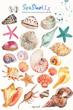Nautical Clipart, Beach Clipart, Summer Clipart, Strand Clipart, Painting Inspiration, Art Inspo, Watercolor Paintings, Beach Watercolor, Sea Shells