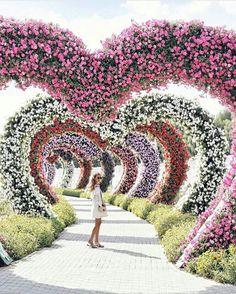 Beautiful! Dubai Miracle Garden
