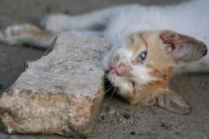 Make a Difference for a Feral Cat With These 7 Tips: Feral Cat Living Rough