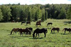 Alberta, Canada http://www.hiddentrails.com/tour/bc_cranbrook_ranch.aspx