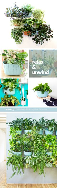 Create elegant living walls, vertical gardens indoors and outdoors! The Patented Wally Eco Wall Planters are designed for plant health and are easy to use. Garden Wall Planter, Living Wall Planter, Vertical Garden Wall, Planters, Plant Health, Houseplants, Spa, Herbs, Green