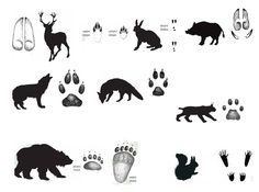 Home Activities, Paw Prints, Reggio Emilia, Dog Training, Stencils, Moose Art, Preschool, Winter, Crafts