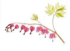 Bleeding Heart Photograph, Valentine Decoration, Botanical Art Print, Scanned Flower by JudyStalus