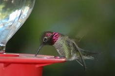 Hummingbirds: A Poem About Pain — Pain News Network