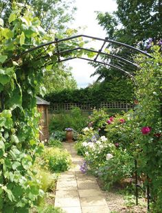 Vine Arch | Ideas For The Garden | Pinterest | Garden Structures, Arches  And Vines