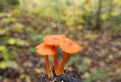 fungi.. resurrection fern