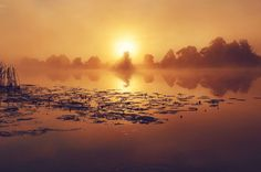 Туманный рассвет на реке Дубна.