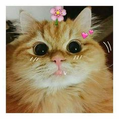 Cute Cats And Kittens, I Love Cats, Cool Cats, Kittens Cutest, Animals And Pets, Baby Animals, Cute Animals, Crazy Cat Lady, Crazy Cats