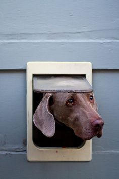 doggie door, I think this might be a stitch too small.