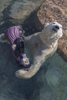 One happy bear