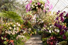 The Orchid Show: Chandeliers in the Enid A. Haupt Conservatory – Photo by Ivo M. Vermeulen