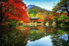 Jaewoon U, a photographer from Seul is the name behind these breathtaking reflected landscapes of the gorgeous South Korea. Jaewoon is mainly focused on Beautiful Landscape Photography, Landscape Photos, Beautiful Landscapes, Hapkido, South Korea Beauty, Cool Pictures, Cool Photos, Colorful Trees, Take Better Photos