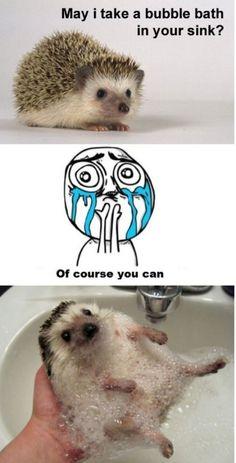 I love Hedgie bath time!!