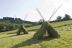 Fresh cut hay drying on the ricks, by Tim Macmillan