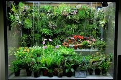 Orchids in Bloom: Rebuilt Orchidarium