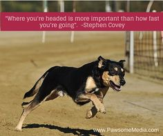 Successful Business At Any Age Stephen Covey, Loyal Friends, Winning The Lottery, First Step, Inspirational Quotes, Racing, Age, Puppies, Animals