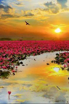 """""""#Lotus """""""