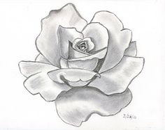 This rose is shaded nicely. How many values do you see in each petal?